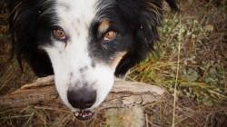 Our dog Bilbo loves fetch!