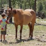 EM justice horse