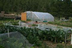csa-garden-2011.jpg (5123777 bytes)